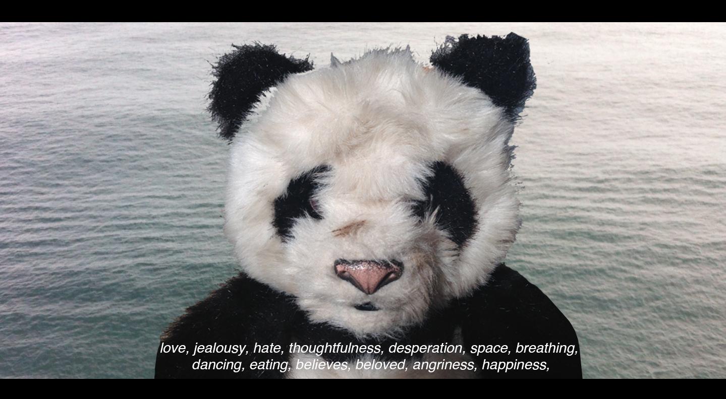 Hannah Polak Panda